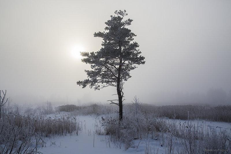 Winter in central Russia